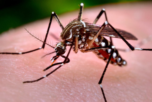 Dengue Syndrome ( Part One)