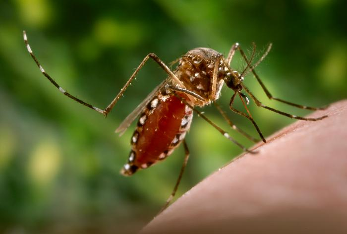 Prevention from Dengue.