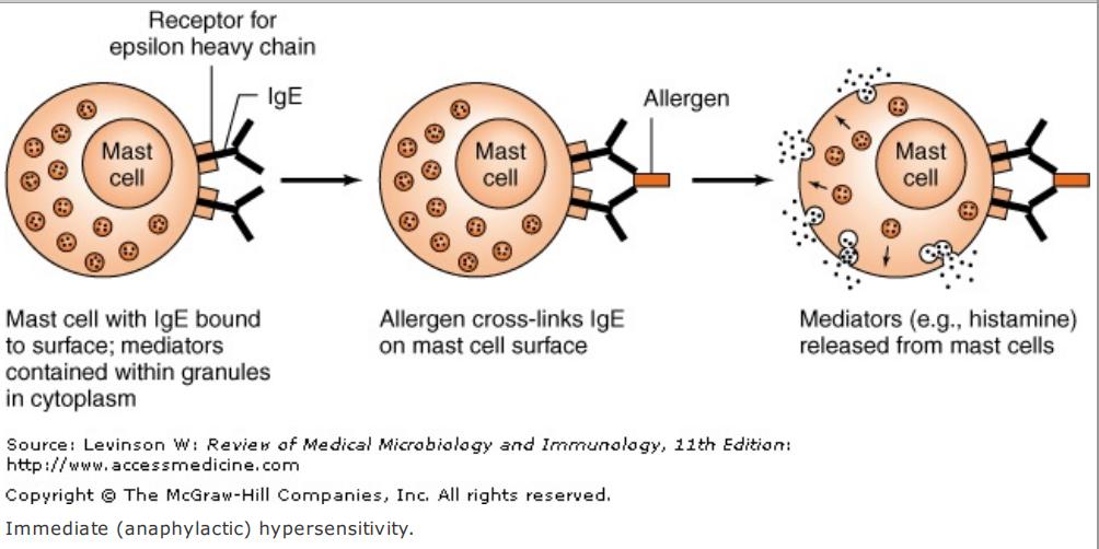 Hypersensitivity-Immunology